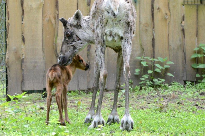 Семейные дни в Рижском зоопарке