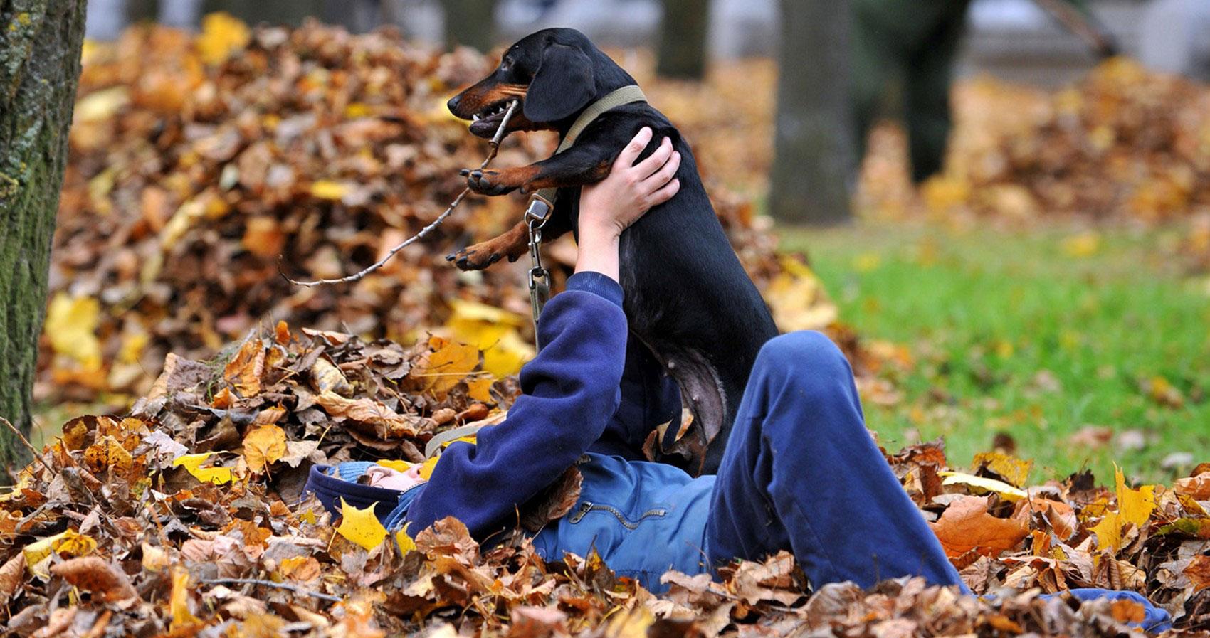 ориентирование с собакой